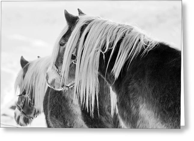 Beautiful Horse Greeting Card by Martin Rochefort