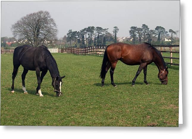 Beautiful Horses Greeting Card
