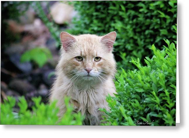 Greeting Card featuring the photograph Beautiful Kitty by Trina Ansel