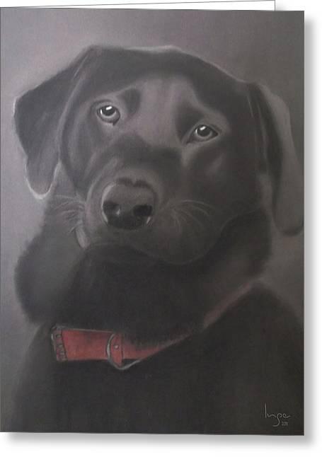 Beautiful Labrador Retriever Greeting Card by Inge Lewis