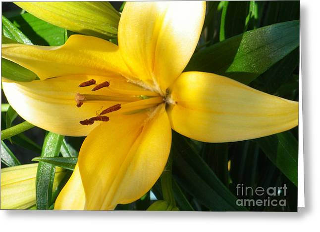 Beautiful Lily I Greeting Card