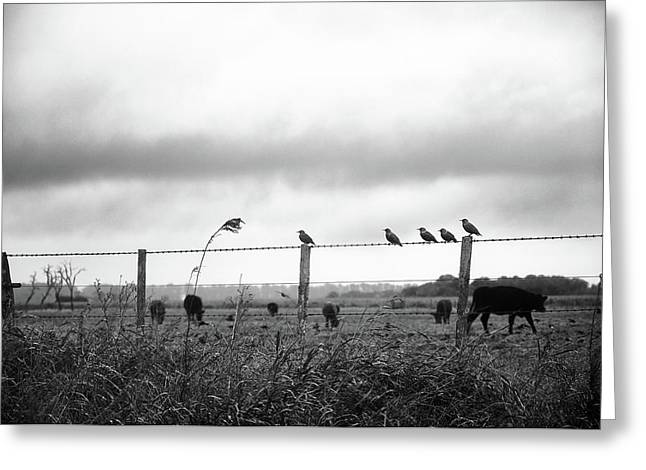 Beautiful Little Birds On Fence Greeting Card