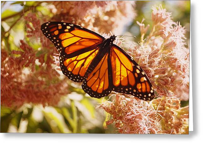 Beautiful Monarch Greeting Card by Beth Collins