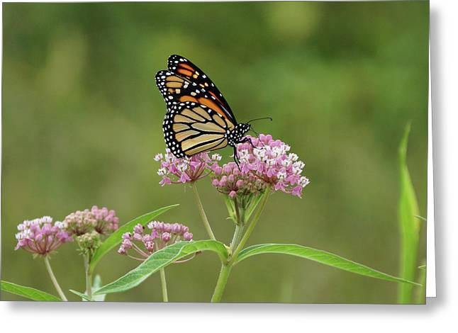 Beautiful Monarch Greeting Card