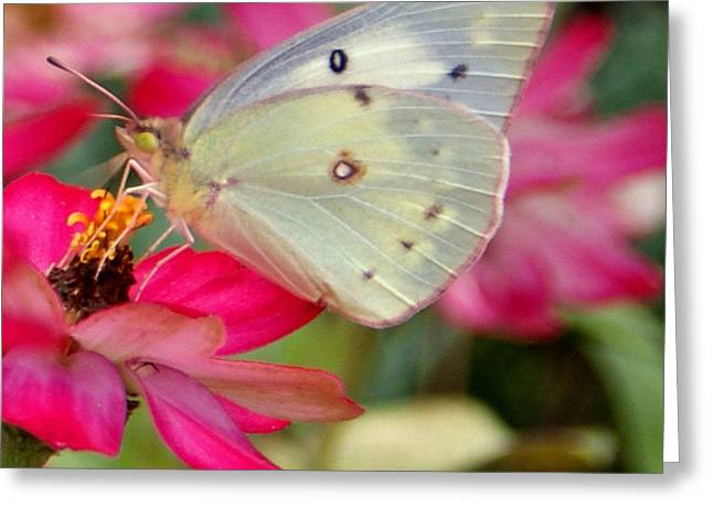 Beautiful Moth Greeting Card by Jean Haynes