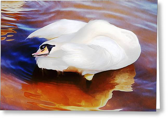 Beautiful Mute Swan Grooming In Shallow Water - Digitalart Greeting Card by Roy Williams