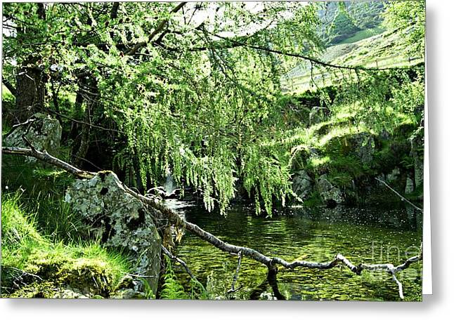 Beautiful Nature Greeting Card by LDS Dya