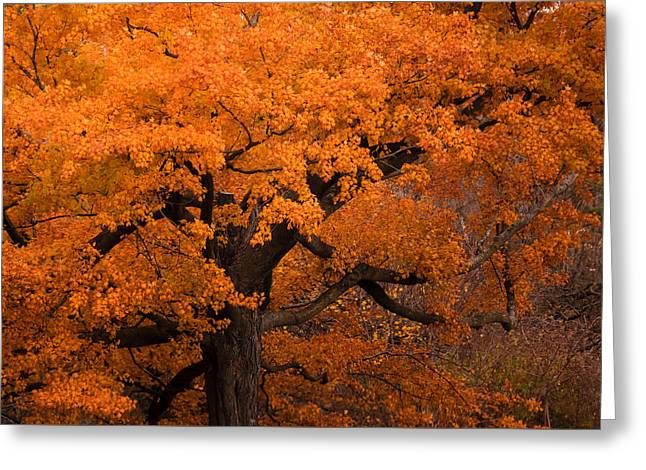 Beautiful Orange Tree On A Fall Day Greeting Card by Joni Eskridge
