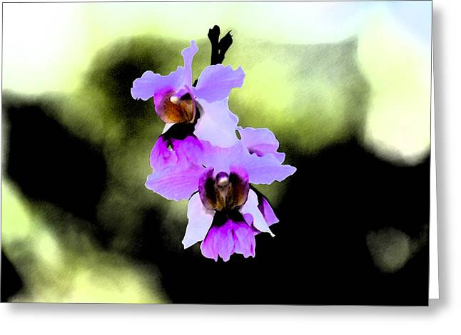 Beautiful Orchid Greeting Card by Nanette Hert