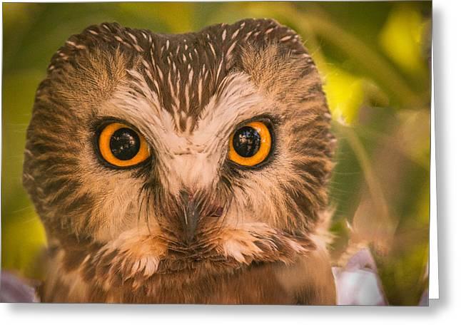 Beautiful Owl Eyes Greeting Card by Robert Bales