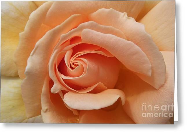 Beautiful Peach Rose Greeting Card by Deborah Brewer