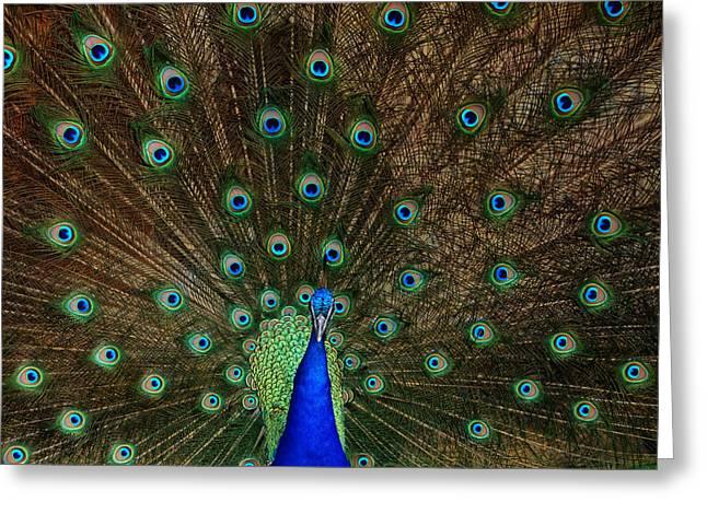 Beautiful Peacock Greeting Card