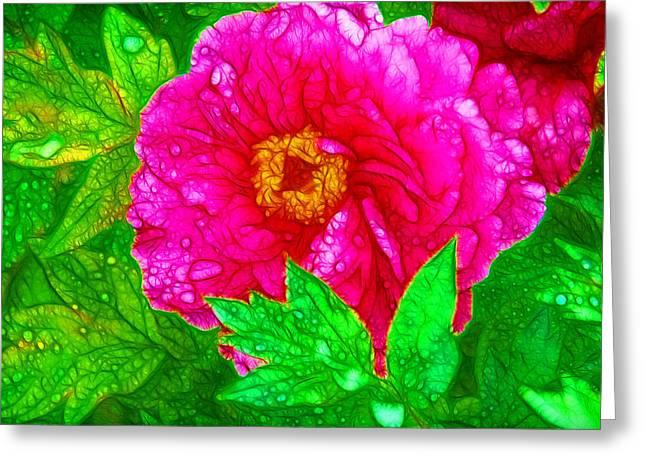 Beautiful Pink Peony Flower 1 Greeting Card