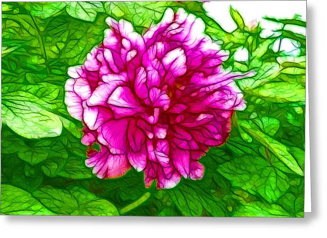 Beautiful Pink Peony Flower 2 Greeting Card