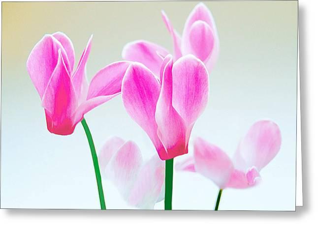 Beautiful Pink Greeting Card