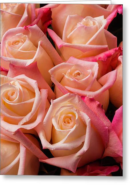 Beautiful Pink Roses Greeting Card