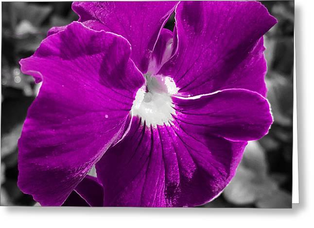 Beautiful Purple Greeting Card