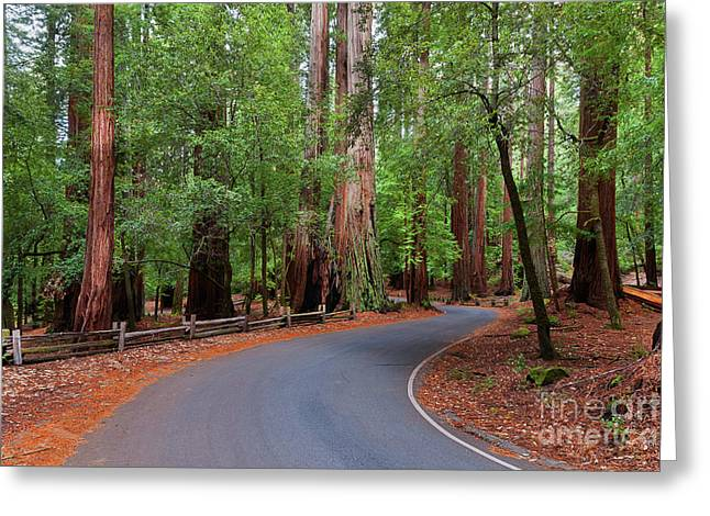 Beautiful Redwood Grove Greeting Card