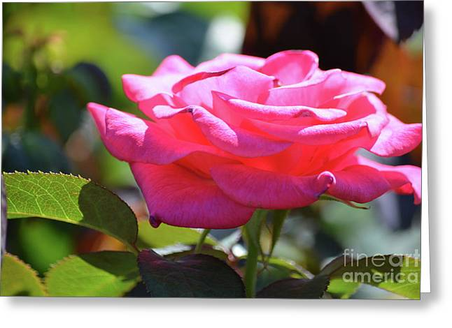 Beautiful Rose 3 Greeting Card by Ruth Housley