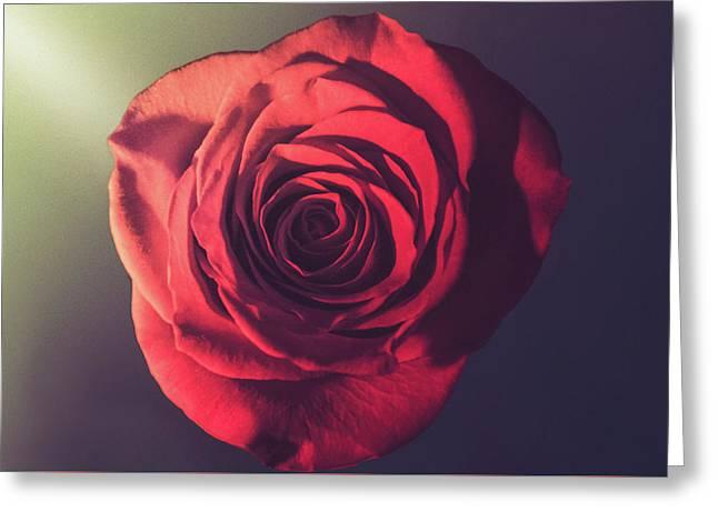 Beautiful Rose Greeting Card by Art Spectrum