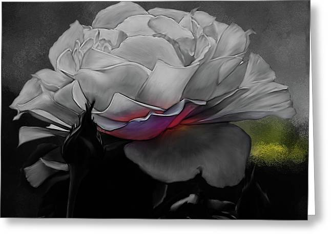 Beautiful Rose In Black  Greeting Card