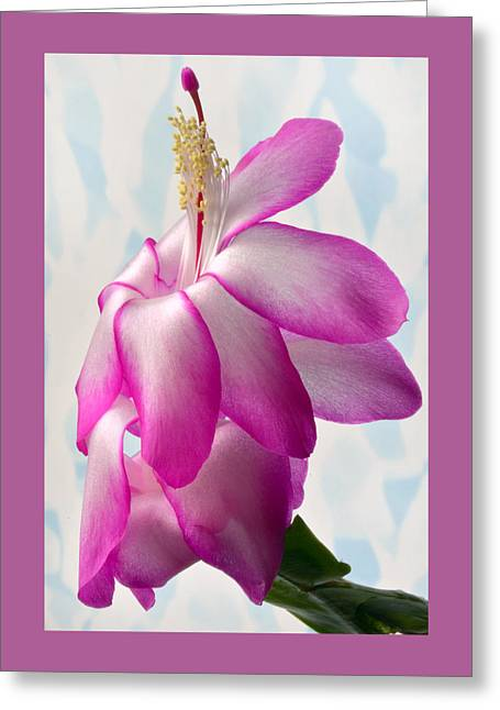 Beautiful Schlumbergera. Greeting Card by Terence Davis