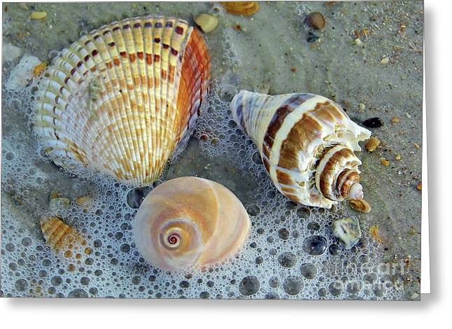 Beautiful Shells In The Surf Greeting Card by D Hackett