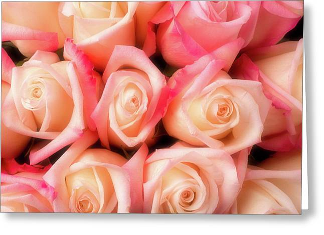 Beautiful Soft Pink Roses Greeting Card