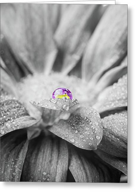 Beautiful Splash Of Purple On A Daisy In The Garden Greeting Card