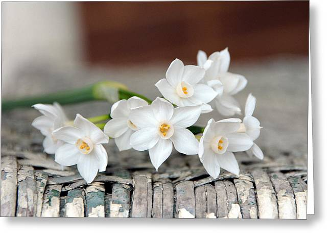 Beautiful Spring Paperwhites Greeting Card by Carla Parris