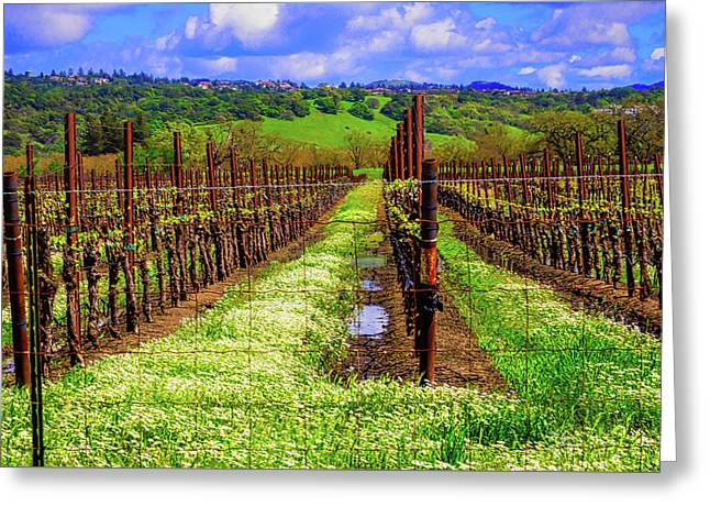 Beautiful Spring Vinyard Greeting Card by Garry Gay