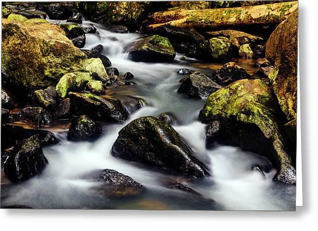 Beautiful Stream In Western Ghats Greeting Card by Vishwanath Bhat