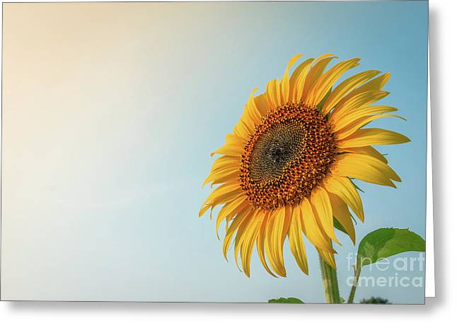 Greeting Card featuring the photograph Beautiful Sunflower And Sun Light Form Top Left. by Tosporn Preede