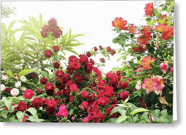Greeting Card featuring the photograph Beautiful Tangled Hedge by Cindy Garber Iverson