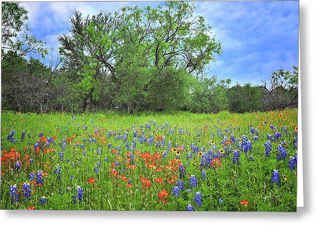 Beautiful Texas Spring Greeting Card