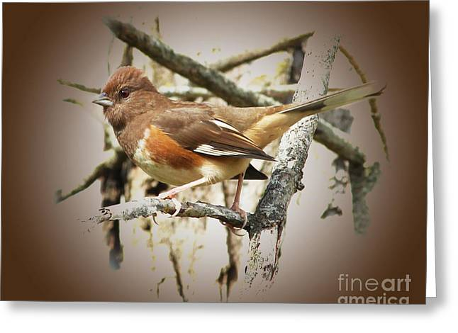 Beautiful Towhee Greeting Card by Anita Oakley