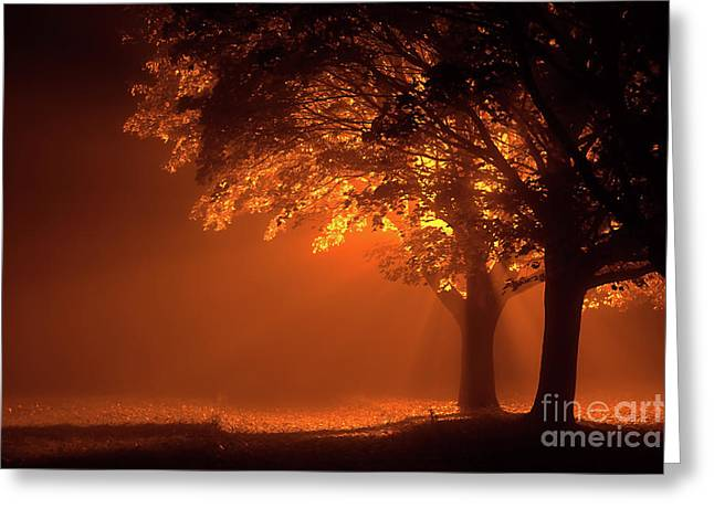 Beautiful Trees At Night With Orange Light Greeting Card by Simon Bratt Photography LRPS