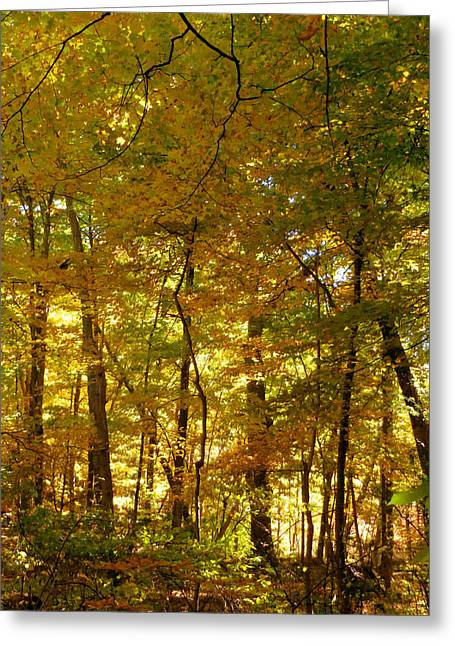 Beautiful Trees In The Forest 14 Greeting Card