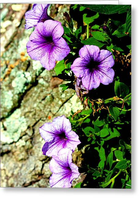 Beautiful Violets Greeting Card