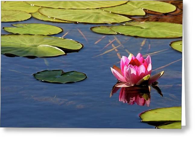 Aquatic Greeting Cards - Beautiful Waterlily Greeting Card by Crystal Garner
