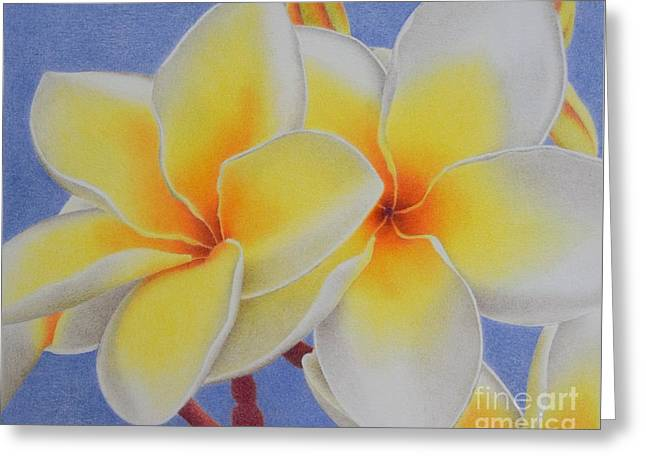Beautiful White Plumeria Greeting Card by Sharon Patterson