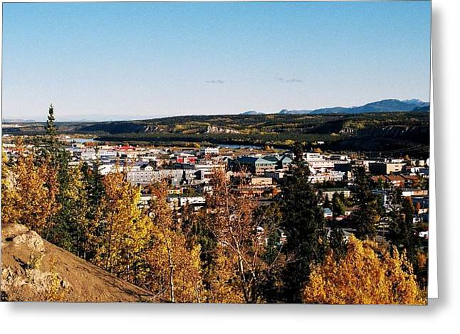 Beautiful Whitehorse ... Greeting Card