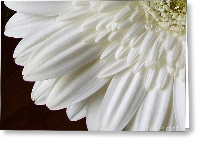 Beautiful Whiteness Greeting Card by Marsha Heiken