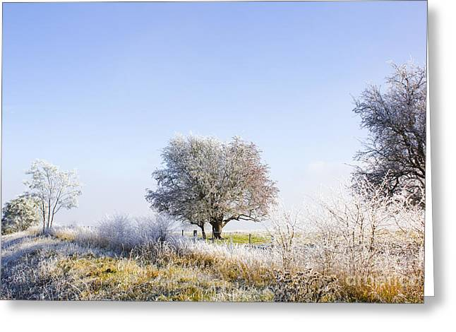Beautiful Winter Background With Snow Tipped Trees Greeting Card