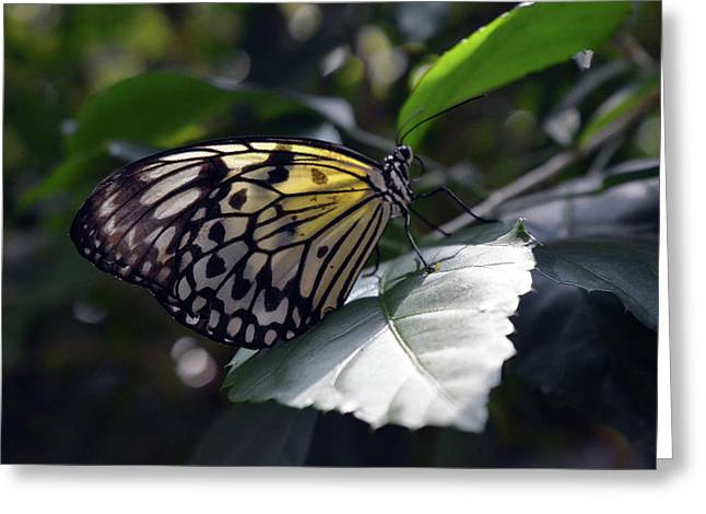 Beautiful Yellow Butterfly On A Leaf Greeting Card