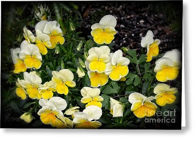 Beautiful Yellow Pansies Greeting Card