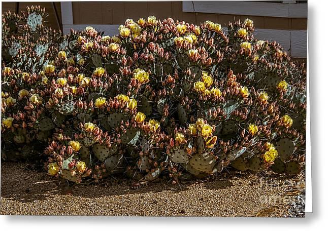 Beautiful Yellow Pickly Pear Cactus Greeting Card