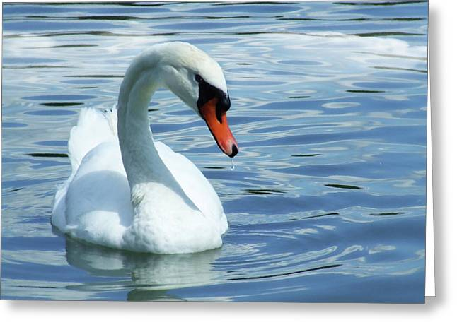 Beautifully Mute Swan Greeting Card by Georgiana Romanovna