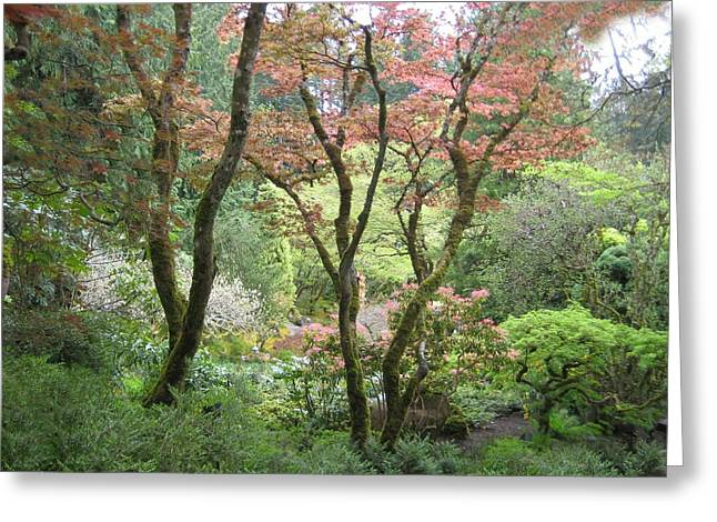 Mauve Greeting Cards - Beauty Among the Trees Greeting Card by Shirley Sirois