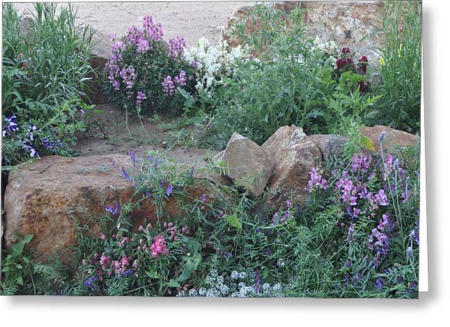 Beauty Amongst The Stones Greeting Card